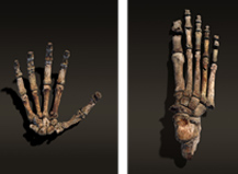 National Geographic <br /> Homo Naledi